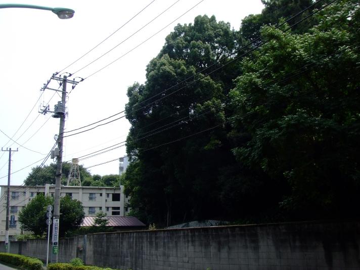 青山トンネル付近
