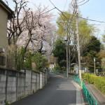 2011年の桜002