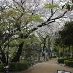 2011年の桜003