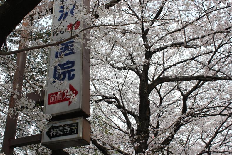 2012年の桜002
